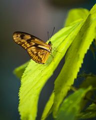 Butterfly on a SlipperySlope (Arranion) Tags: buttergarden butterfly butterflyworld capetown animals insects wings colours nature outdoor outdoorbeauty southafrica leaves green canon eos 5d2 70200mm f4