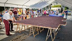Blueberry Pie (Dan Guimberteau) Tags: dxo lightroom food fruit cake cooking treignac correze limousin tourism