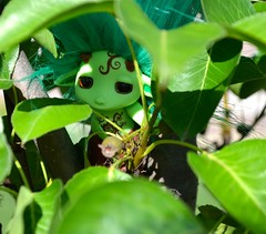 Birchy Hiding (linda_lou2) Tags: 365the2018edition 3652018 day176365 25jun18 365toyproject 176365 zelfs birchy toy figure tree leaves