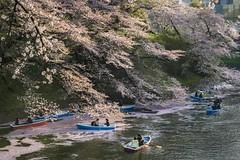 Chidorigafuchi Park Tokyo Japan (nguyentruyen344) Tags: tokyo chidorigafuchi park cherry blosom canal boat brental sakura spring station japan