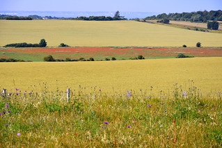 Chalkland meadows and Poppies.