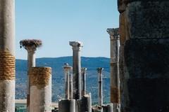 Columns, Volubilis (Granpic) Tags: morocco maroc volubilis roman romantown columns nests storks