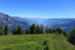 sur la Grand Garde 2145 mètres (bulbocode909) Tags: valais suisse ovronnaz grandgarde paysages montagnes nature alpages prairies arbres mélèzes vert bleu