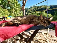 Don Gato descansando