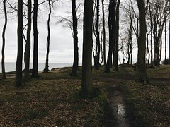 the forest by the sea (Vivid Silence) Tags: sea balticsea ostsee heiligendamm meckpomm mecklenburgvorpommern sand winter forest trees