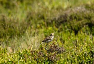 Wildlife around Magdalen June 2018 057
