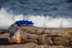Blue Fundy Flip Flop Family (jah32) Tags: flipflops blue blueflipflops stjohn newbrunswick canada driftwood waves bayoffundy atlantic shore shoreline beach beaches summer summertime irvingnaturepark
