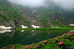 Le lac Vert, Luchonais. (jpto_55) Tags: lac étang lacvert rhododendron reflet eau montagne pyrénées hautegaronne france xe1 fuji fujifilm fujixf1855mmf284r
