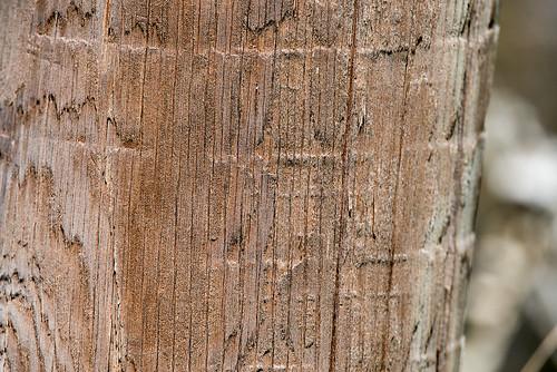 Wood ©  Andrey