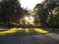 Hen at Sunrise in Harold Park (Mel_is_Moving) Tags: epl6 olympus pen trees outside sun ducks outdoors grass birds sunrise sunbeam shadows bradford westyorkshire uk