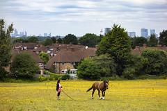 Horse Training, Eltham (London Less Travelled) Tags: uk unitedkingdom england britain london southlondon eltham city urban park greenwich horse skyline yellow training