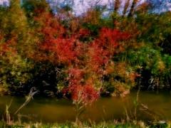 Naturae Heart (Stefano M. Naïf) Tags: natura nature cuore heart stagno pond water acqua albero tree piante pianta plant plants foglie cespuglio erba grass