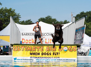 Ultimate Air Dogs (explore 7/16/18)