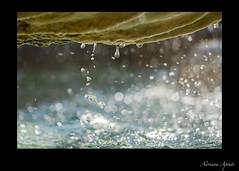 Roma, fontana in piazza S. Maria in Trastevere, particolare (adrianaaprati) Tags: rome fountain water drops july summer bokeh blur roma fontane