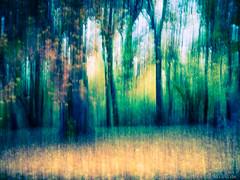 20151107-_1040967-G615-Tobias-Jeschke-www-fotoist-de (tobias jeschke fotoist.de) Tags: blätter bäume halle herbst jungfernwiese landschaftsbilder langzeitbelichtung verwaschen