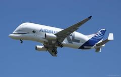 Airbus A330-743L Beluga XL - F-WBXL Airbus Industrie - Toulouse Blagnac LFBO/TLS (19/07/2018) (loic.mayeur) Tags: toulouse blagnac france airport landing pilot giantaircraft newaircraft cargo airbusfamily belugaxl airbus