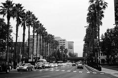 Santa Clara Street // San Jose (bior) Tags: neopan sanjose santaclarastreet palmtree street leicam3 fujifilmneopan400 filmphotography 35mmfilm rangefinder