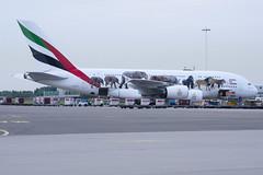 Emirates A380-861 A6-EEI (Gideon van Dijk) Tags: vliegtuig vliegveld luchthaven luchtvaart plane planespotting planes nikon nikond7200 d7200 ebace ebace17 ebace2017 amsterdam schiphol spl ams eham amsterdamairportschiphol amsterdamschiphol nederland netherlands emirates a380861 a6eei emiratesairline airbus a380 a380800 unitedforwildlife 123 cn123 ek uae airbusa380861