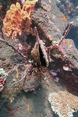 Clam 2 (2) (Petter Thorden) Tags: diving indonesia bali tulamben underwater clam reeffishes