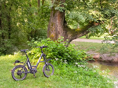 Im Englischen Garten, München (Janos Kertesz) Tags: englishgarden englischergarten münchen munich bayern bavaria fahrrad pedelec isy baum biker cyclist biking bike bicycle sport nature cycling speed motion summer adventure lifestyle activity wheel