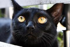 On the balcony. (Beckerhenning) Tags: cat katze nikon d7200 sigma 1770mm