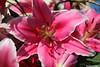 p7389_Errel2000_Praalwagen (Errel 2000 Fotografie) Tags: praalwagens noordwijkerhout roblangerak errel2000 bloemen flowers corso bloemencorso bollenstreek bloembollenstreek kleurrijk