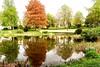 Hermeskeiler Stadtpark (Antje_Neufing) Tags: hermeskeil hochwald rheinlandpfalz stadtpark spiegelung wasserspiegelung natur frühling