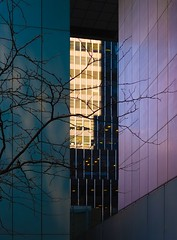 NYC Arch & Trees #39 (Ximo Michavila) Tags: nyc tree winter newyork city usa abstract windows building urban ximomichavila graphic architecture archdaily archidose archiref glass lines contrast shadow light