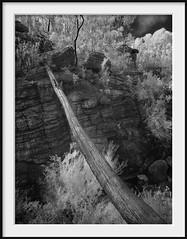 the bridge (Andrew C Wallace) Tags: infrared ir turretfalls gariwerd grampiansnationalpark victoria australia thephotontrap olympusomdem5 microfourthirds m43 blackandwhite bw tree goatrockcreek
