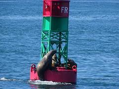 DSC03640 (jrucker94) Tags: juneau alaska cruise cruiseport seal seals buoy ocean inlet red green