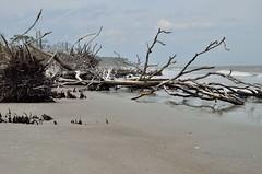 2018 05 06 059 Hunting Island, SC (Mark Baker.) Tags: 2018 america baker carolina hunting island mark may north south us usa beach day outdoor photo photograph picsmark spring states united
