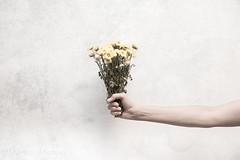 Erinnerungen an die Schönheit, die einst war. (Martin.Matyas) Tags: blumen