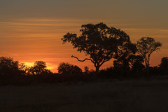 Sunset, Okavango Delta (mclcbooks) Tags: sunset dusk sundown evening trees silhouettes clouds landscape okavangodelta botswana africa splashcamp safari
