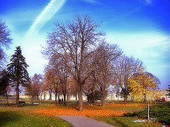 Kalemegdan, outumn in park (Superoperater hero) Tags: beograd bluesky kalemegdan park photos tree tvrdjava outumn