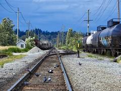 Mind the Pigeons (robinlamb1) Tags: landscape railroad railroadtrack track tankcars parked pigeons huntingdon