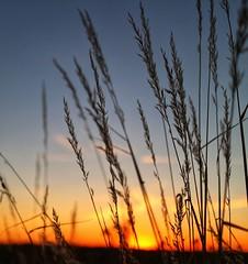 Last take (Rainer D) Tags: sundown sunset red orange outdoor weed blue evening backlight