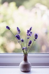 (Girl With Butterfly Wings) Tags: lavender flower plant nature fresh purple lilac vase kitchen window summer