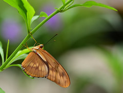 Butterfly (CU TEO MD) Tags: wildlife thewildlife butterfly outdoor maryland macro105mm macrodreams macrophotography ngc twop soe artofimages simplysuperb nikon naturebynikon