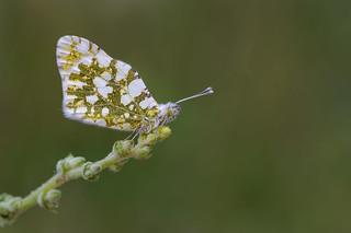 colores bellos de mariposa