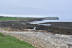 Seal Beach (PLawston) Tags: uk britain scotland orkney mainland palace birsay grey seals beach marwick head
