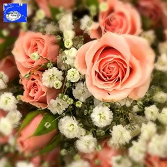 "Roses and Flowers HD Video (EDWW day_dae (esteemedhelga)™) Tags: garden nature season flower splants bloom botany nursery parks blossom perennial annual bud cluster floret efflorescence seedling biennial greenery bouquet posy rosette natura mothernature greatmotherdamenature"" vegetation horticulture flora botanical juncture natural beauty creation siring passion sprout esteemedhelga edww daydae"
