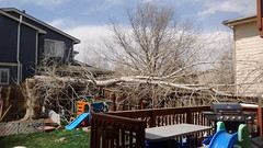April 17, 2018 - Strong winds cause damage in Thornton. (Megan Miller)