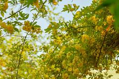 Spring Sketchbook (shmc5hamer) Tags: spring colour garden