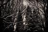 Winter #5 (edgar.cherkasov) Tags: forest winter winterforest darkplace mood landscape grain jupiter9 snow sepia evergreen