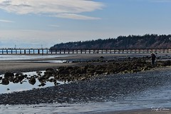West Beach - White Rock (SonjaPetersonPh♡tography) Tags: whiterock whiterockpromenade whiterockpierpromenade whiterockpier bc britishcolumbia canada nikon nikond5300 beach eastbeach railway southsurrey tide sand water ocean pacificocean pacificnorthwest trains bnsf burlingtonnorthernsantaferailway reflections waterreflections rocks rocky landscape waterscape