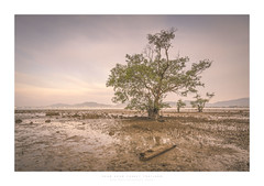 40 love (Khun Jeremy) Tags: thailand phuket khaokhad tide mangrove chalong driftwood mud sony