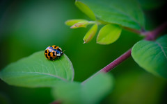 Ladybug ... (Julie Greg) Tags: ladybug nature leaf colours fujifilmxt20 park details macro