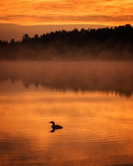 Minnesota Morning (Justin Loyd Photography) Tags: still vertical ngc nature layers fog canon5dmarkiv 24105l june tranquil orange calm morning silhouette reflection peaceful beautiful goldenhour sunrise canon northcountry lake loon