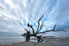 Fallen (Christina DeAngelo) Tags: charleston southcarolina botanybay boneyardbeach beach shore sand puddle reflections tree branches uprooted clouds sky morning blue radialclouds