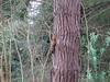 DSCF8423 (caerphillyramblers) Tags: glyns photos from tresco